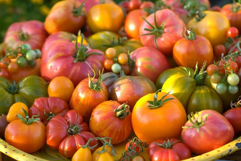 Rosé Sneak Preview at Tomatomania